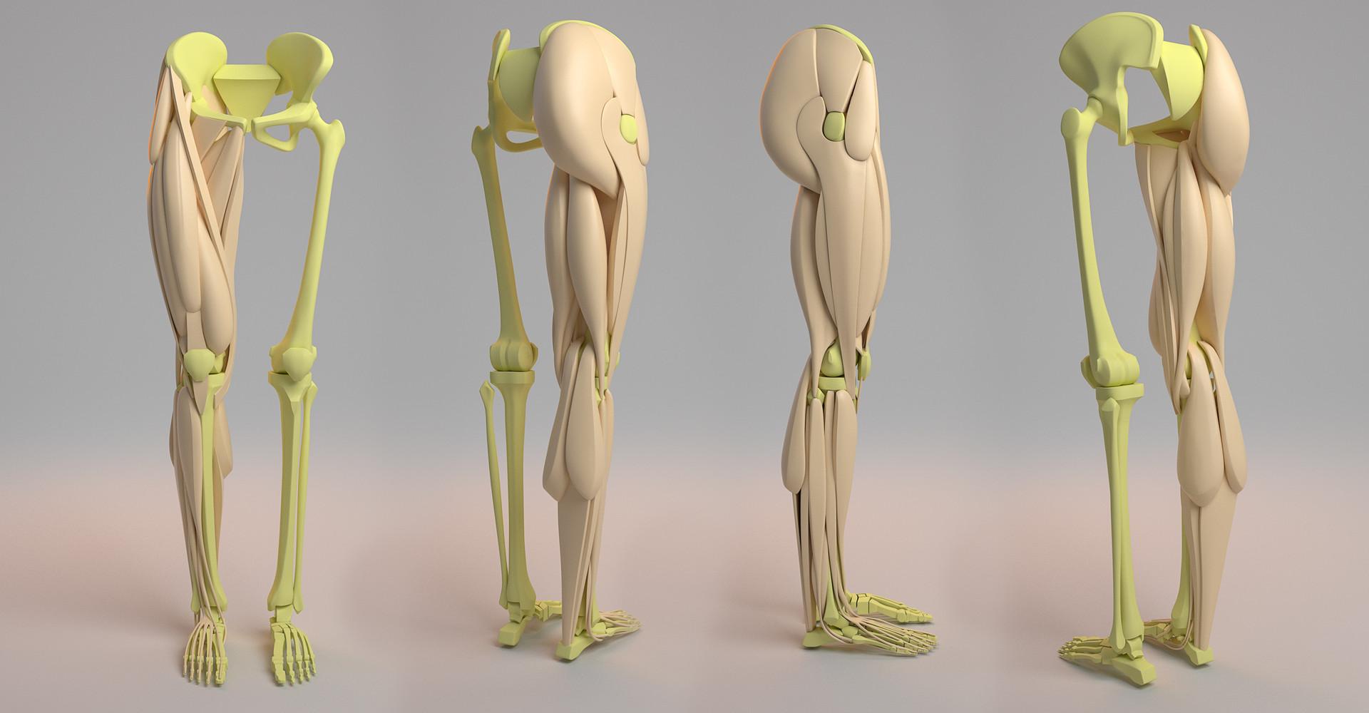 Artstation Leg Anatomy Aleksandrs K