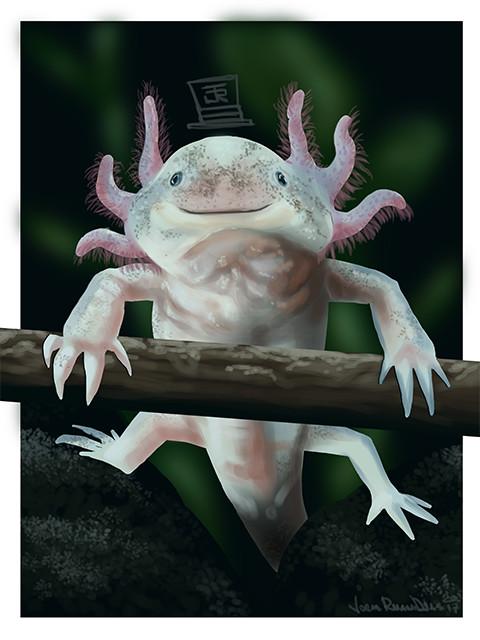Jorge dias axolotl small