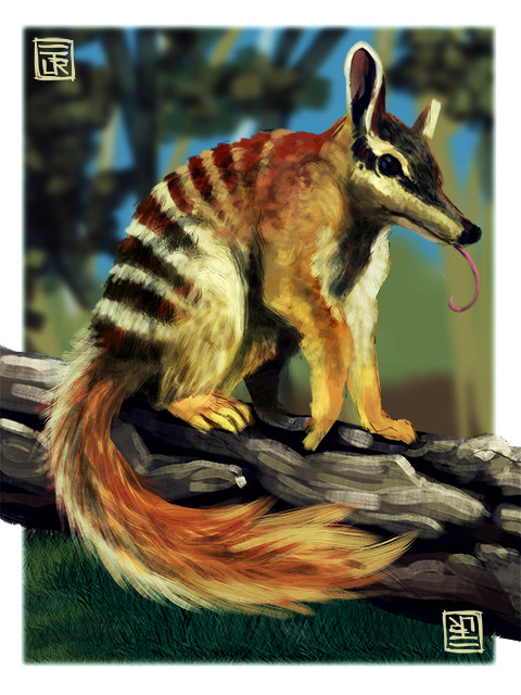 Jorge dias numbat small