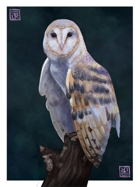 Jorge dias owl small