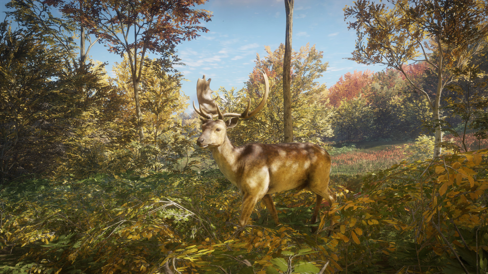 Yarrid henrard fallow deer foliage