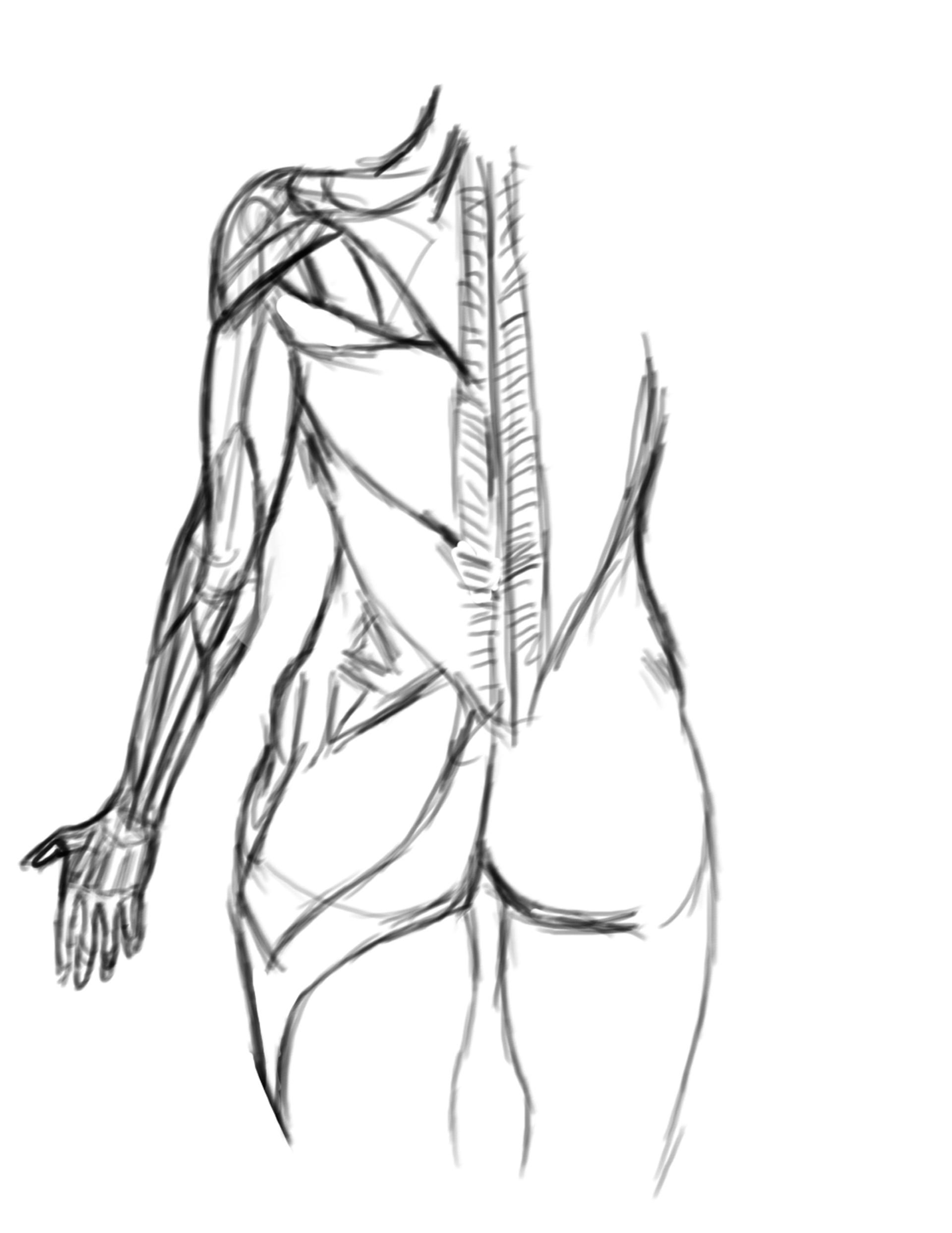 Pedro E Anatomy Tools Female Anatomy Sculpture Study