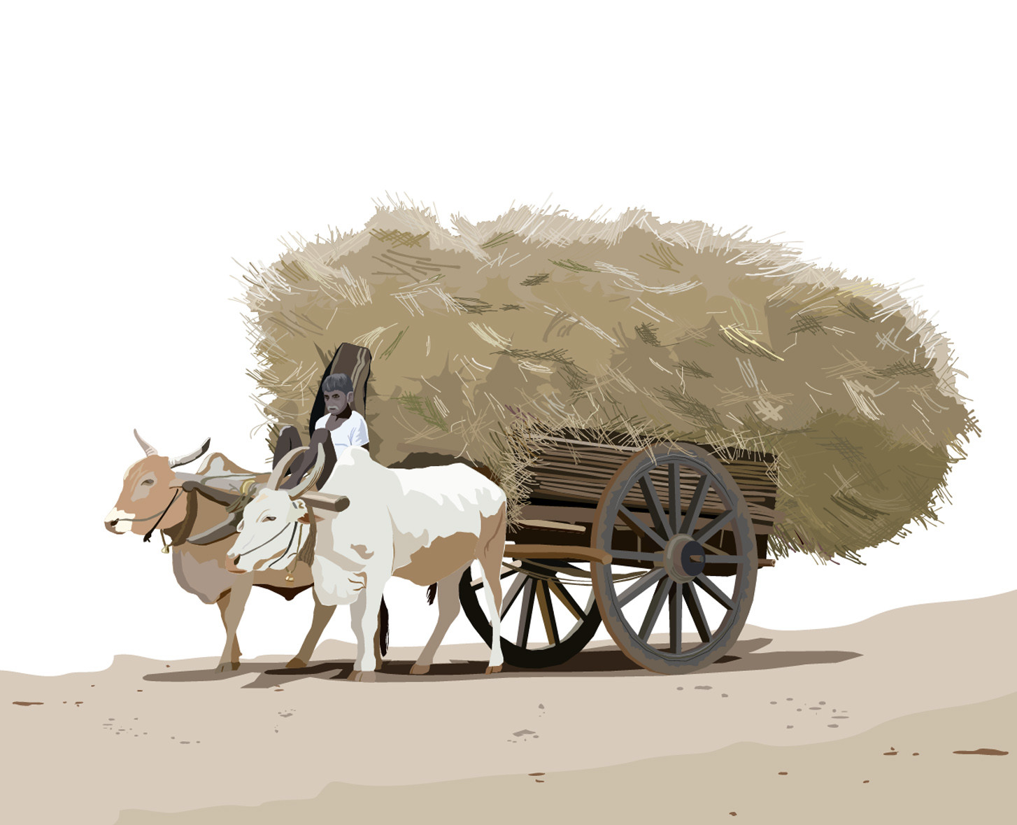 Rajesh sawant bullock cart konkan close up