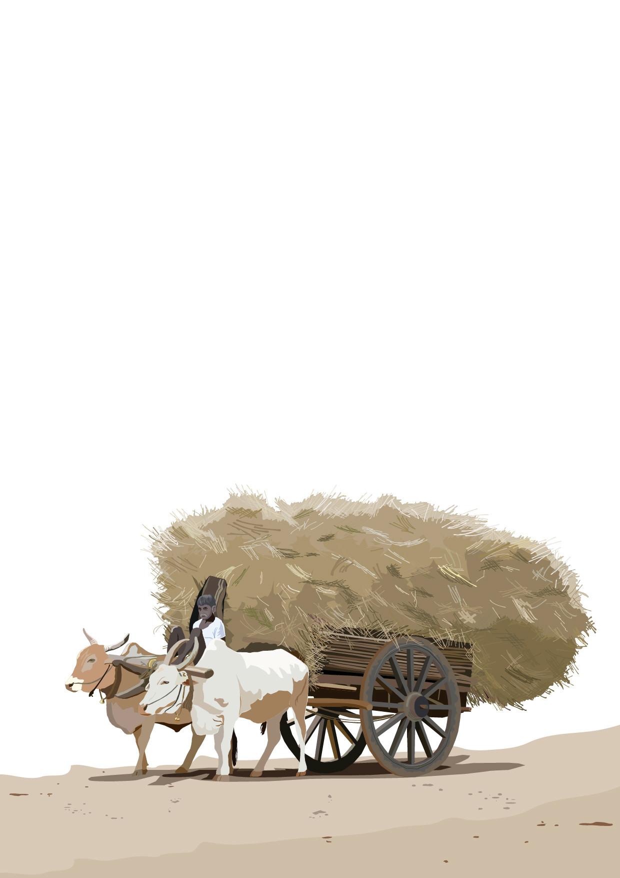 Rajesh sawant bullock cart konkan 01