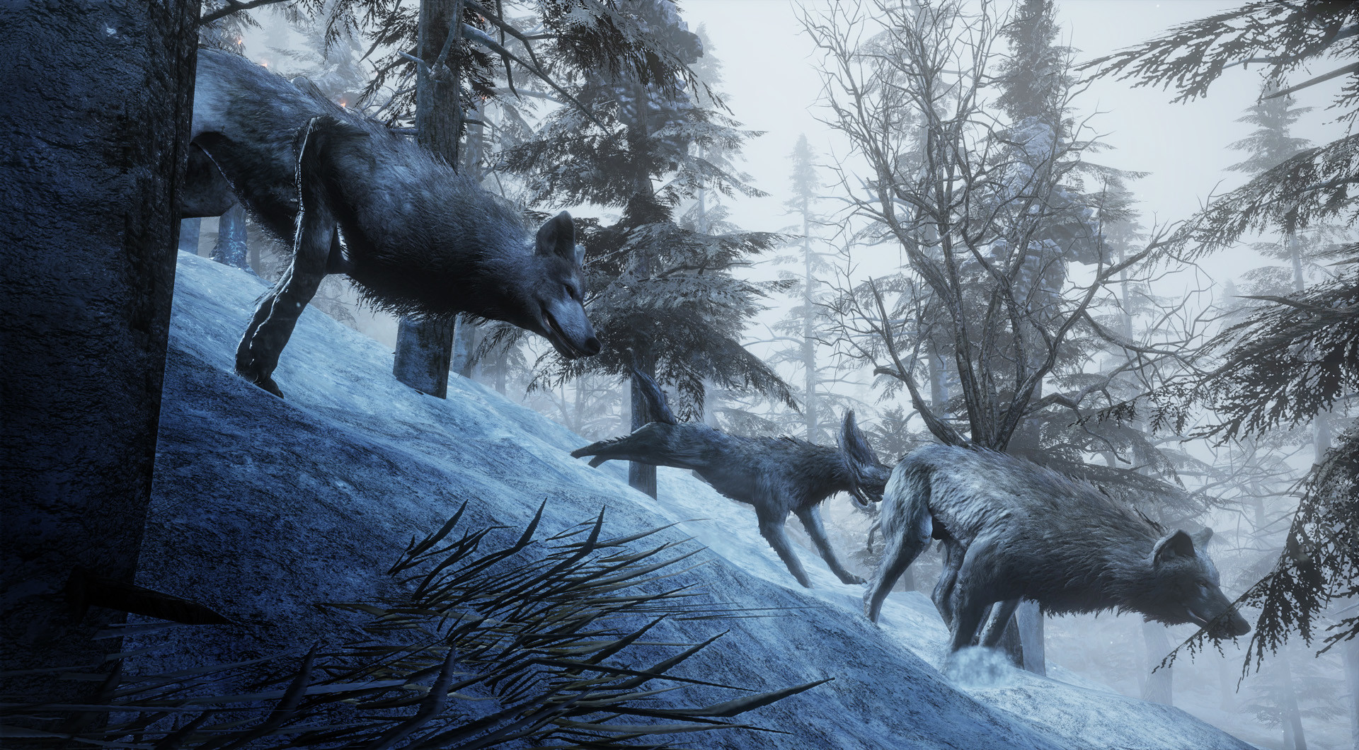 Dani santos wolf 01