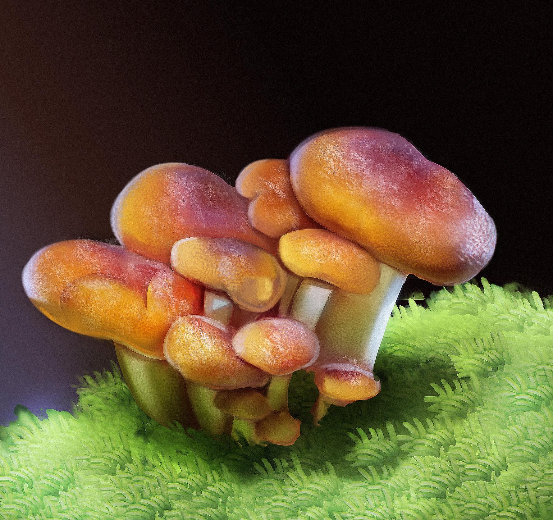 Guilherme freitas estudo cogumelo