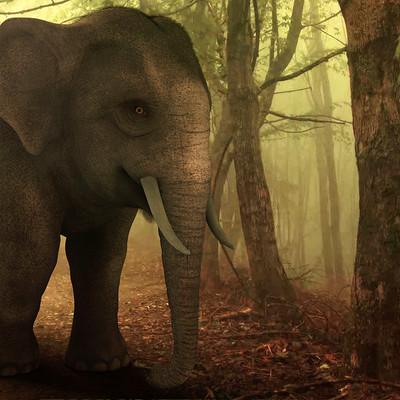 Surajit sen asian elephant surajitsen 11062017