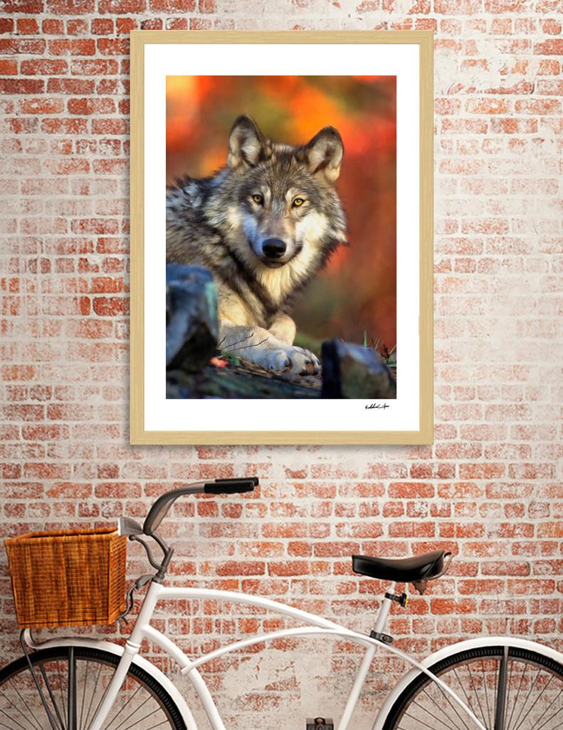 Eddie christian autumnwolf curioos 001