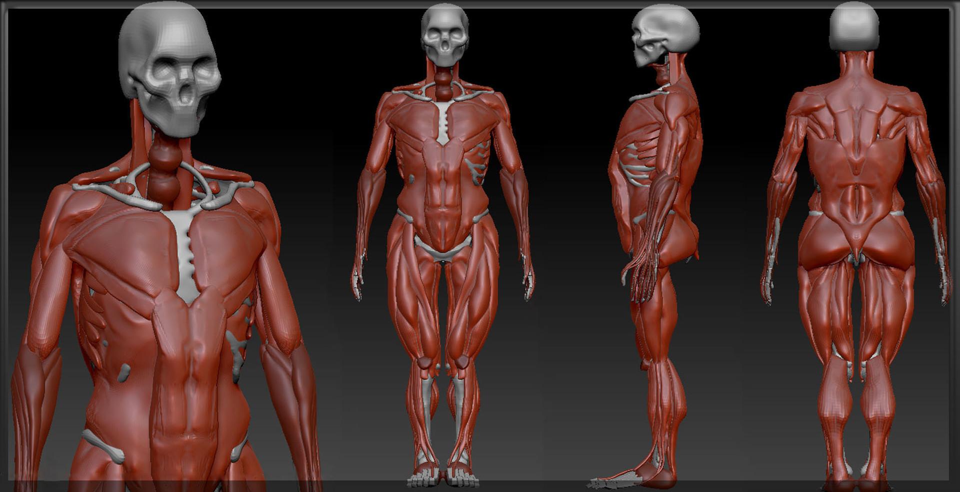 roozbeh iravani - Anatomy studies