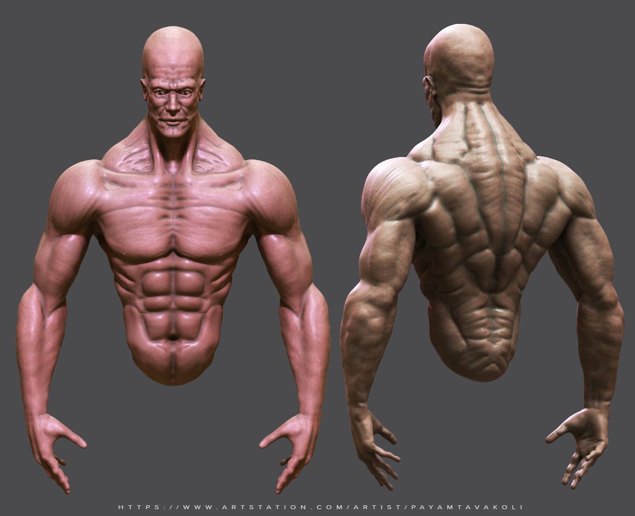 Payam Tavakoli - Male Anatomy Sketch