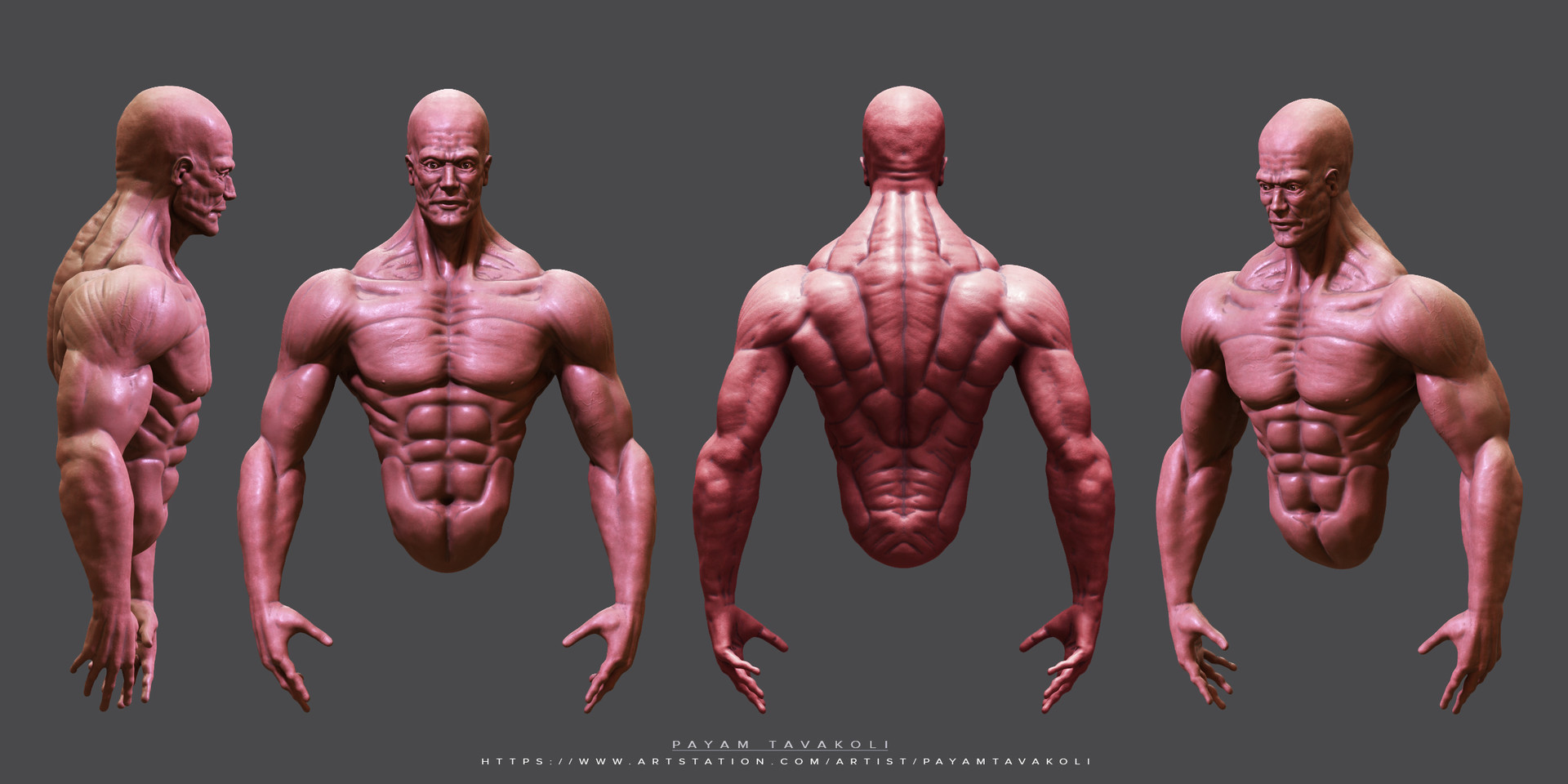 ArtStation - Male Anatomy Sketch , Payam Tavakoli