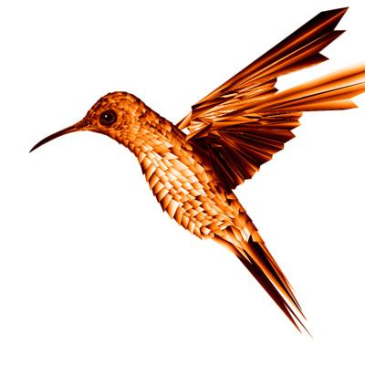 Nikolay krastev humming bird transperant background