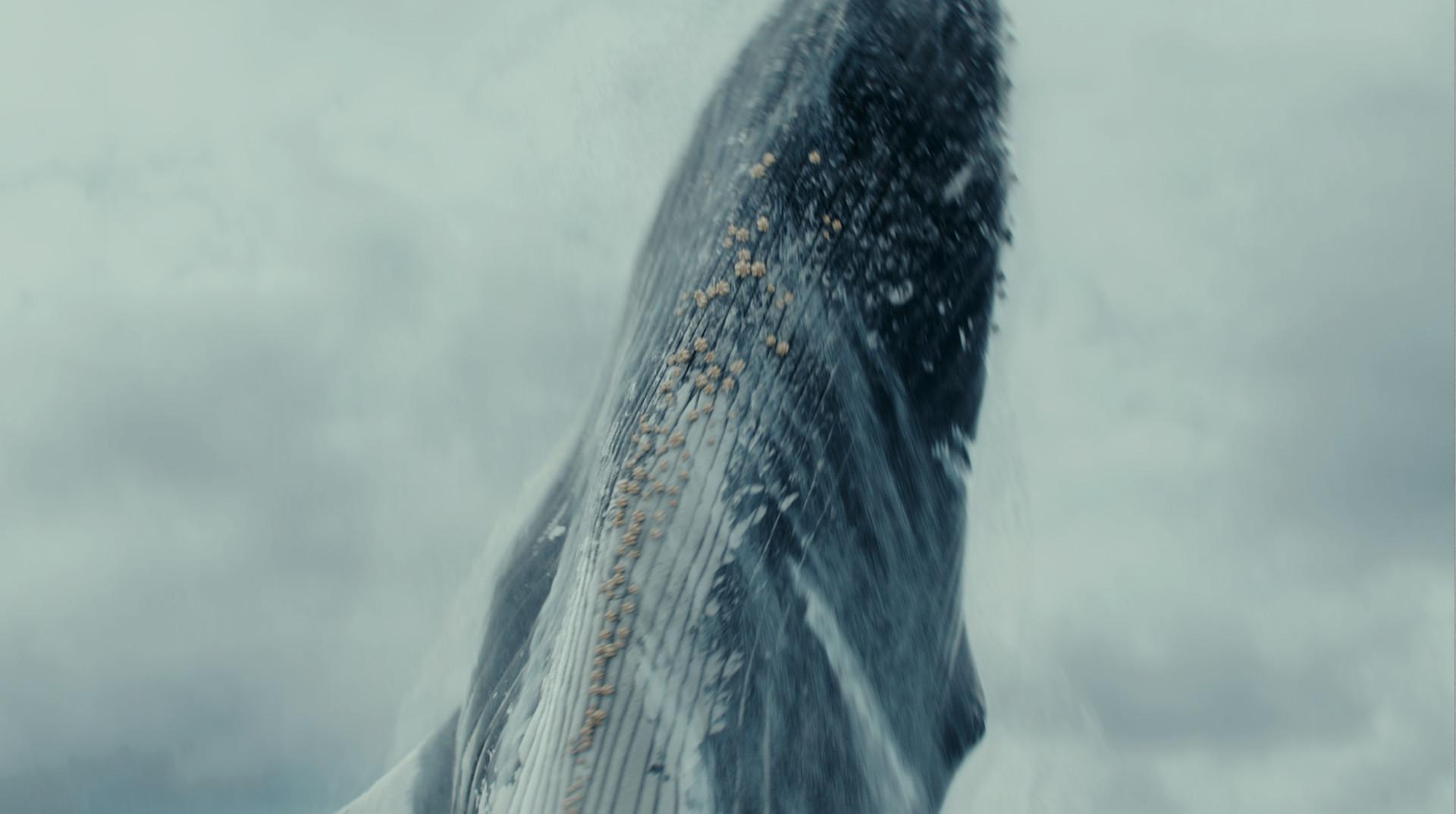 Krystal sae eua whale
