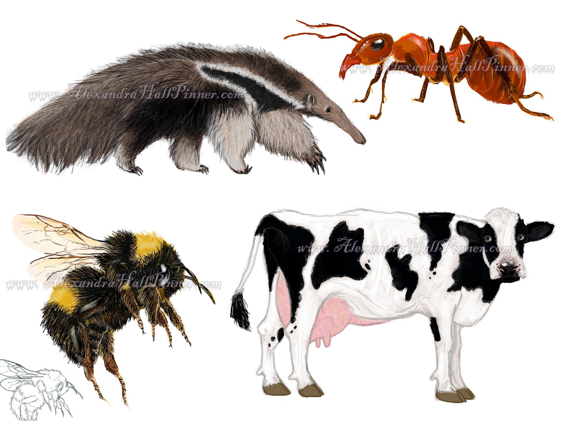 Alexandra hall pinner animals compile