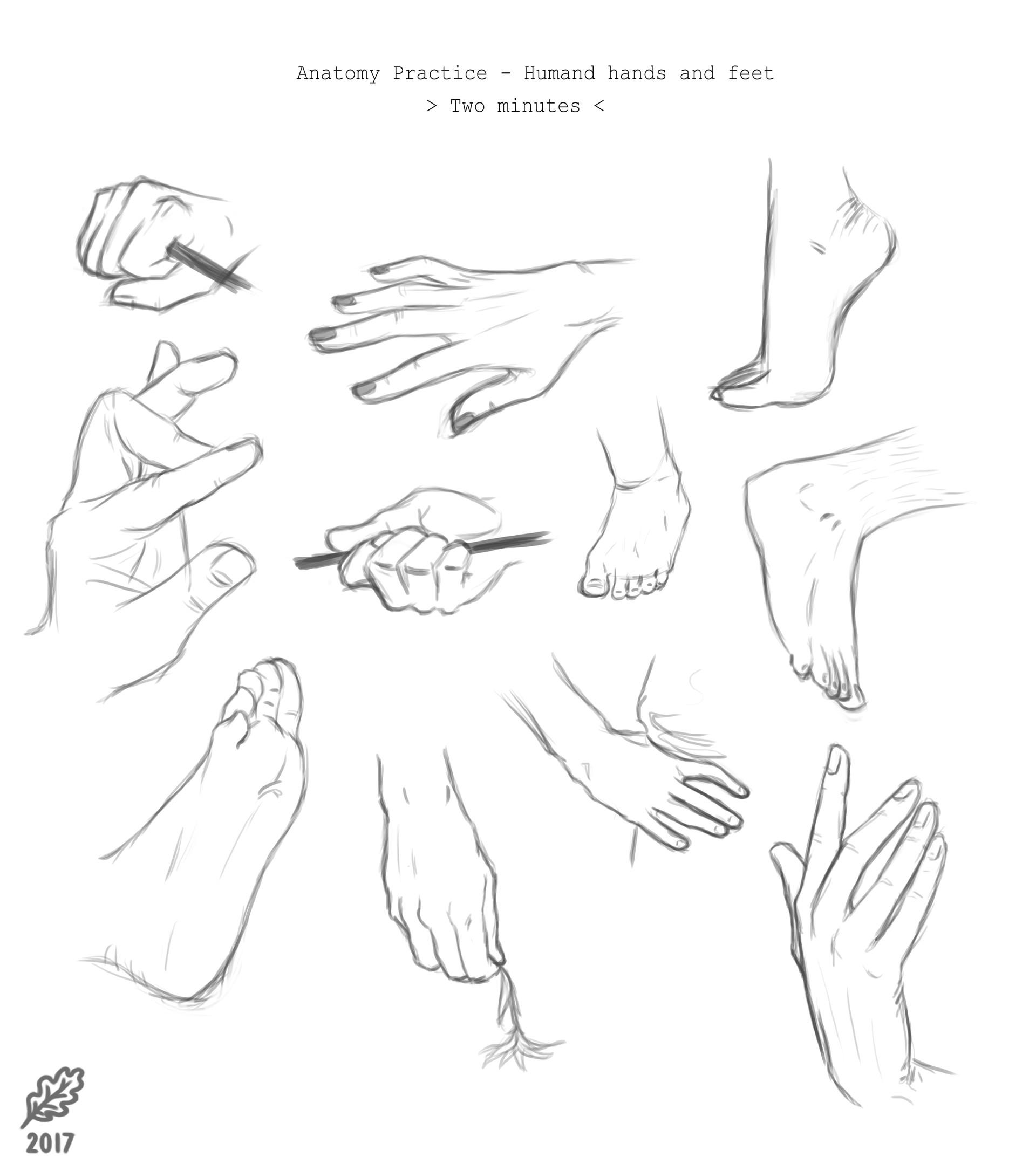 Gwen Bergers - Anatomy Studies