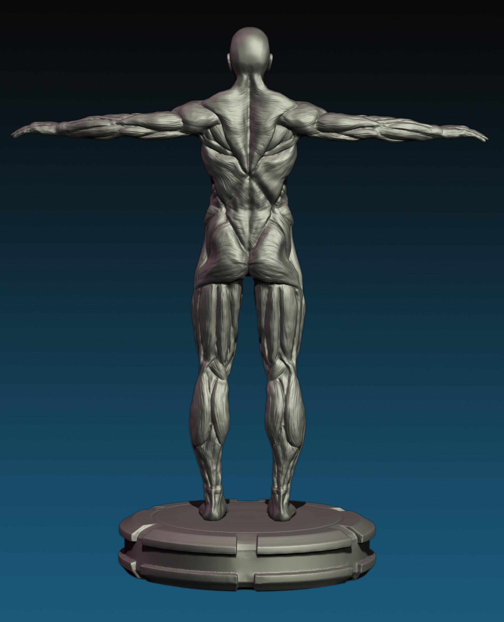 Ungewöhnlich Anatomie Und Physiologie Muskelgewebe Quiz Bilder ...
