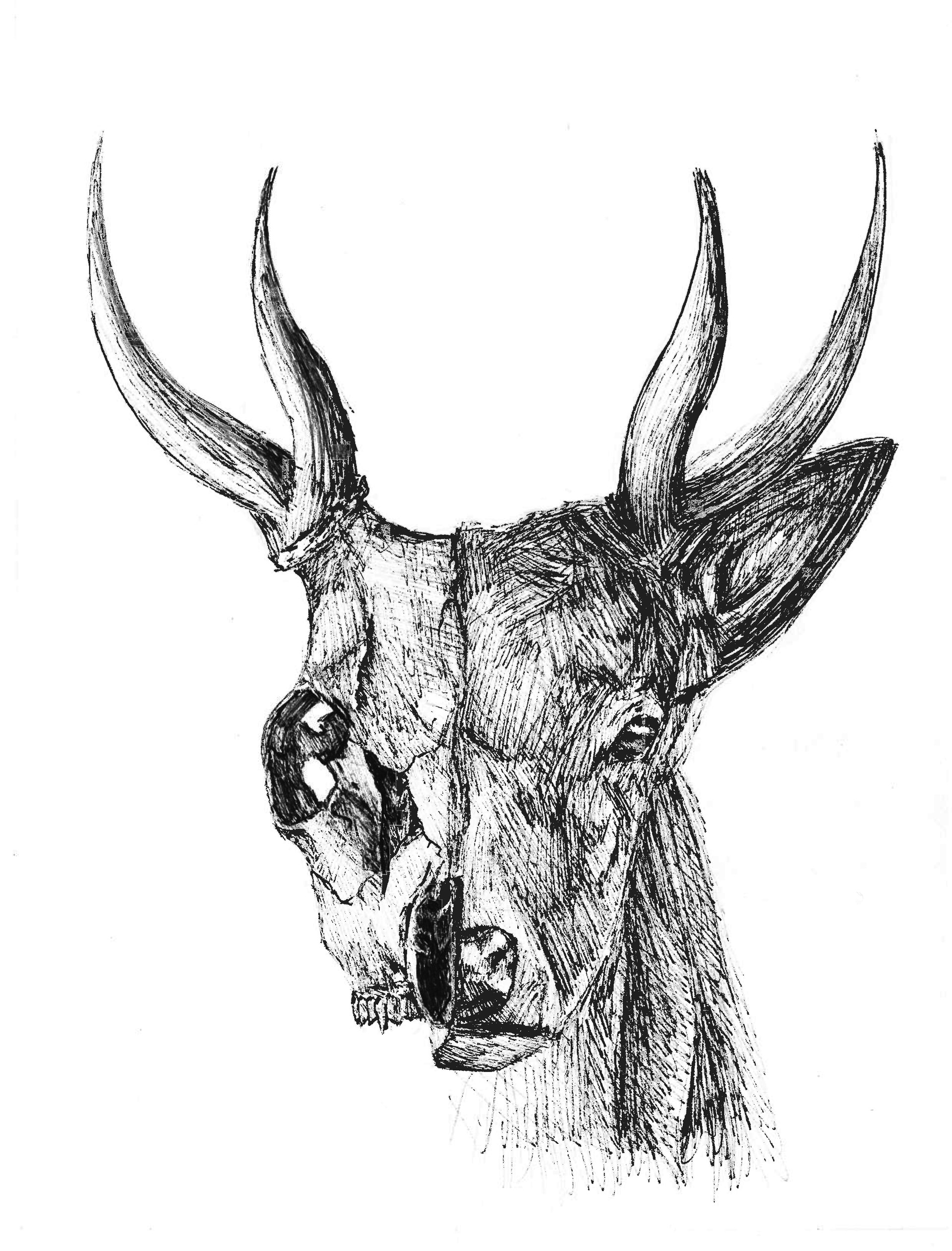Tyrique Chin Hon Foei - Deer Anatomy