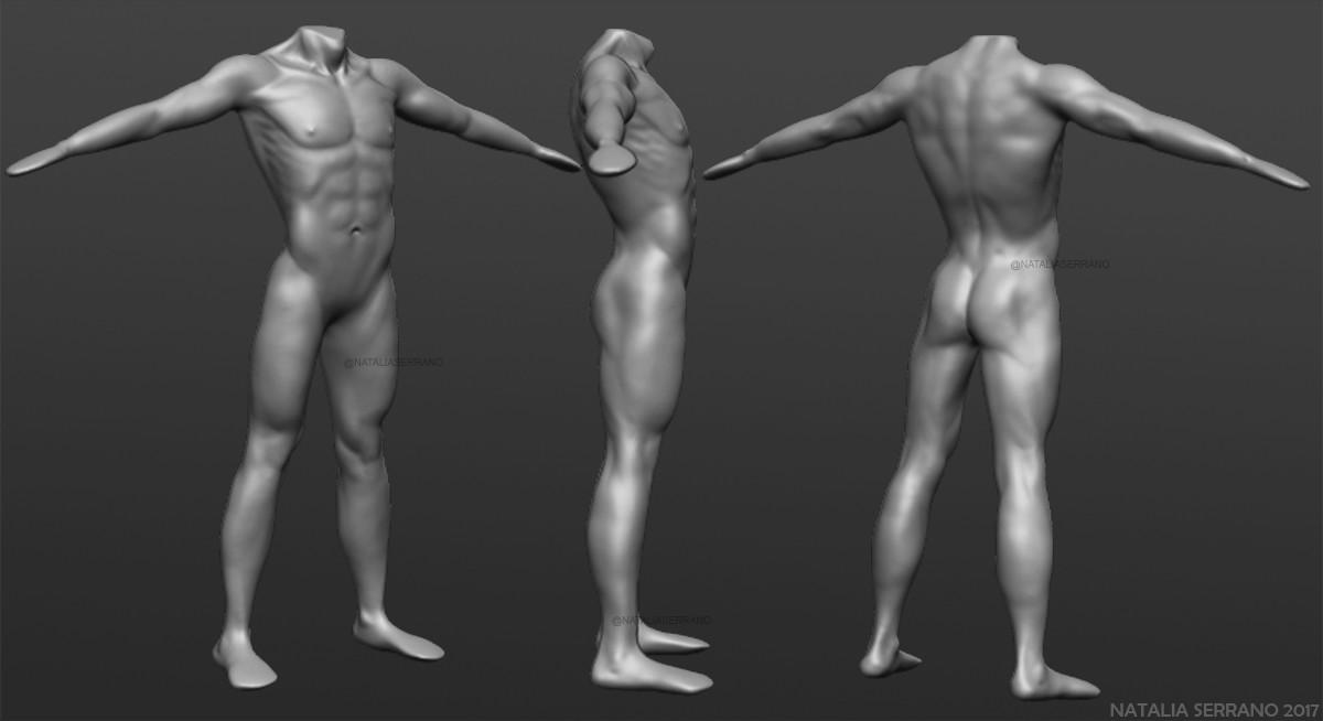Natalia Serrano - Male anatomy study