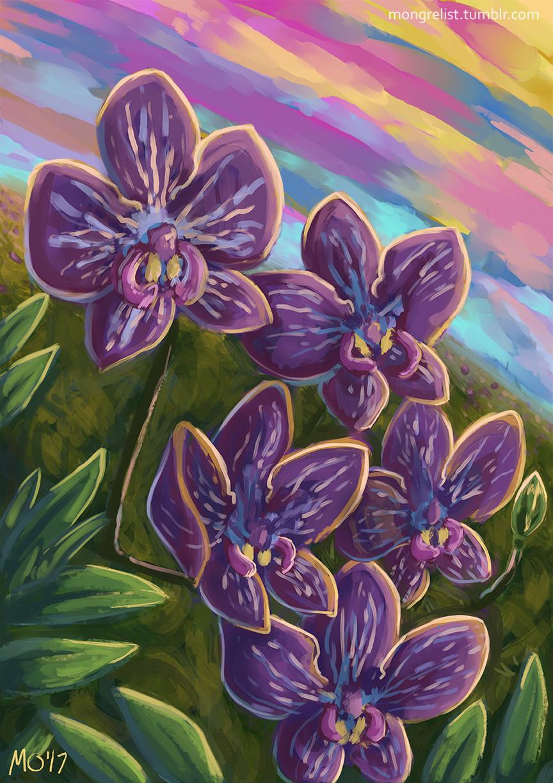 M o hanlon orchids