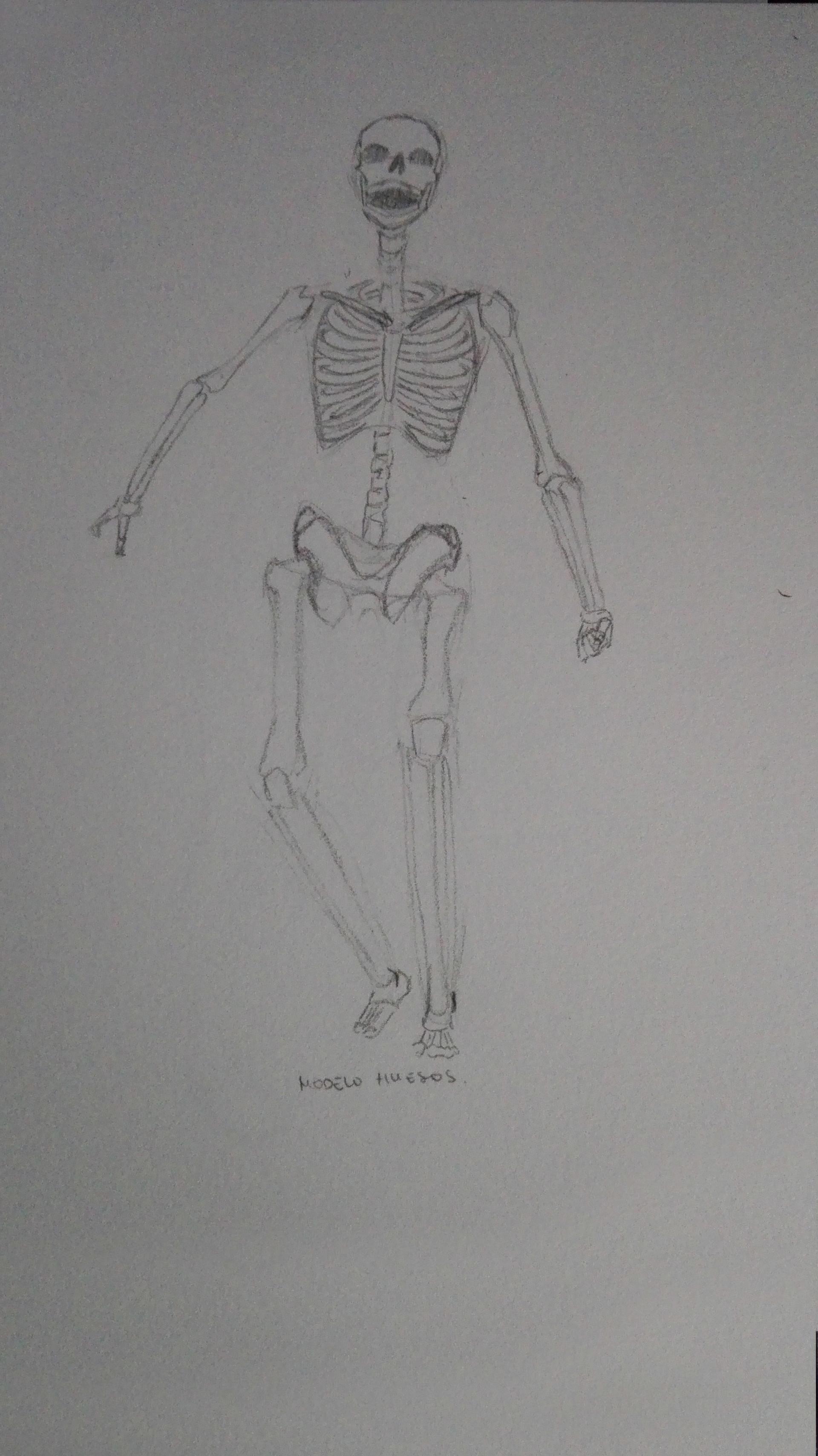 Sonia Garitaonandia - Anatomía