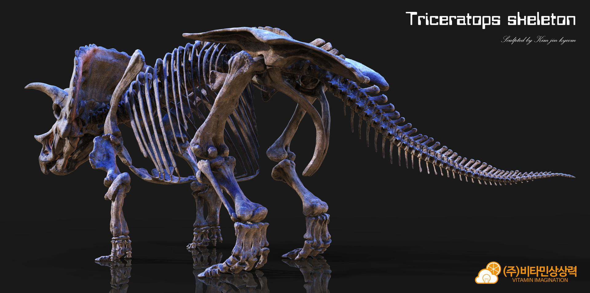Vitamin imagination triceratops 2017 skeleton3