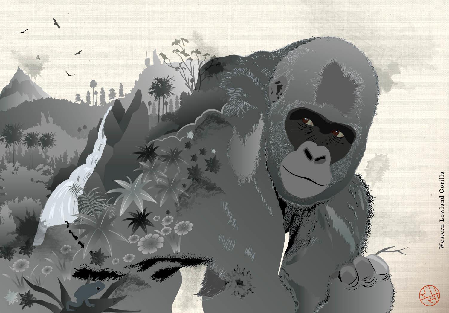 Rajesh sawant western lowland gorilla clsup1