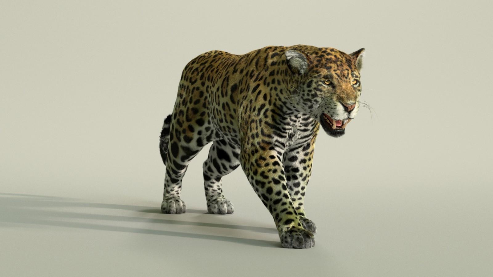 A still from Jaguar Turntable