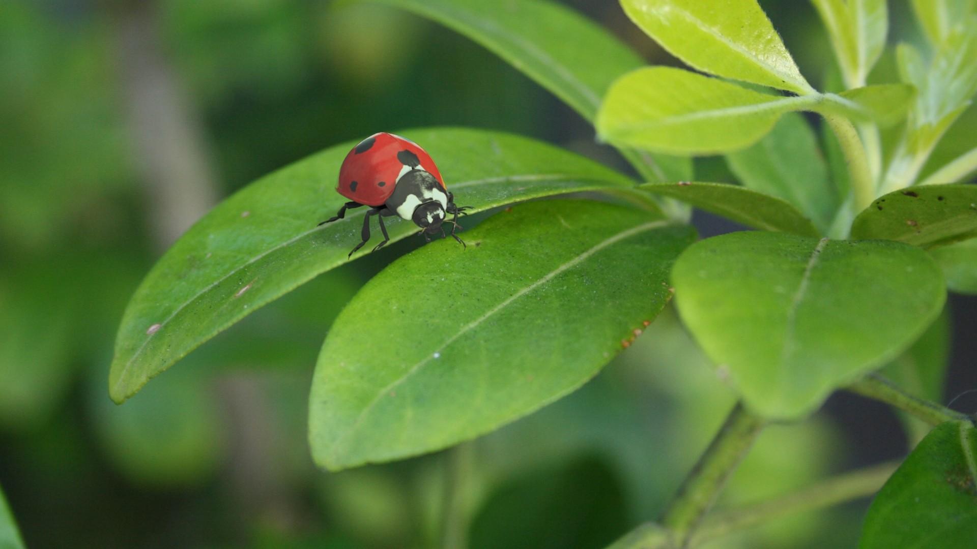 Crystal bretz ladybug cmp v001