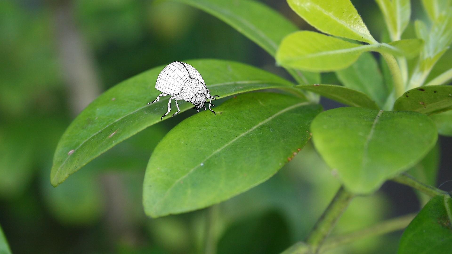 Crystal bretz ladybug cmp wf v001