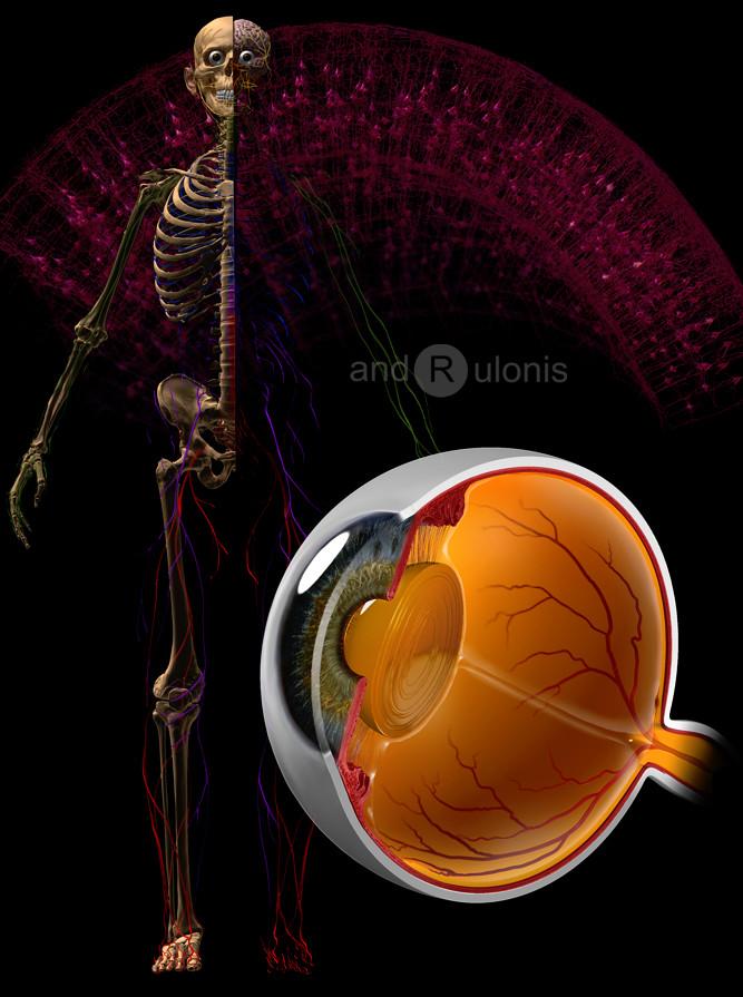 Dariusz andrulonis eye