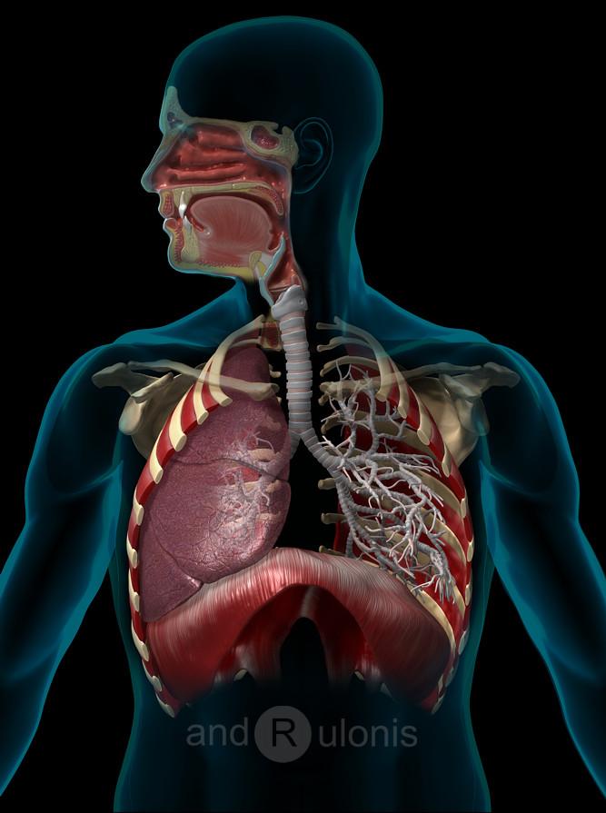Dariusz andrulonis respiratory