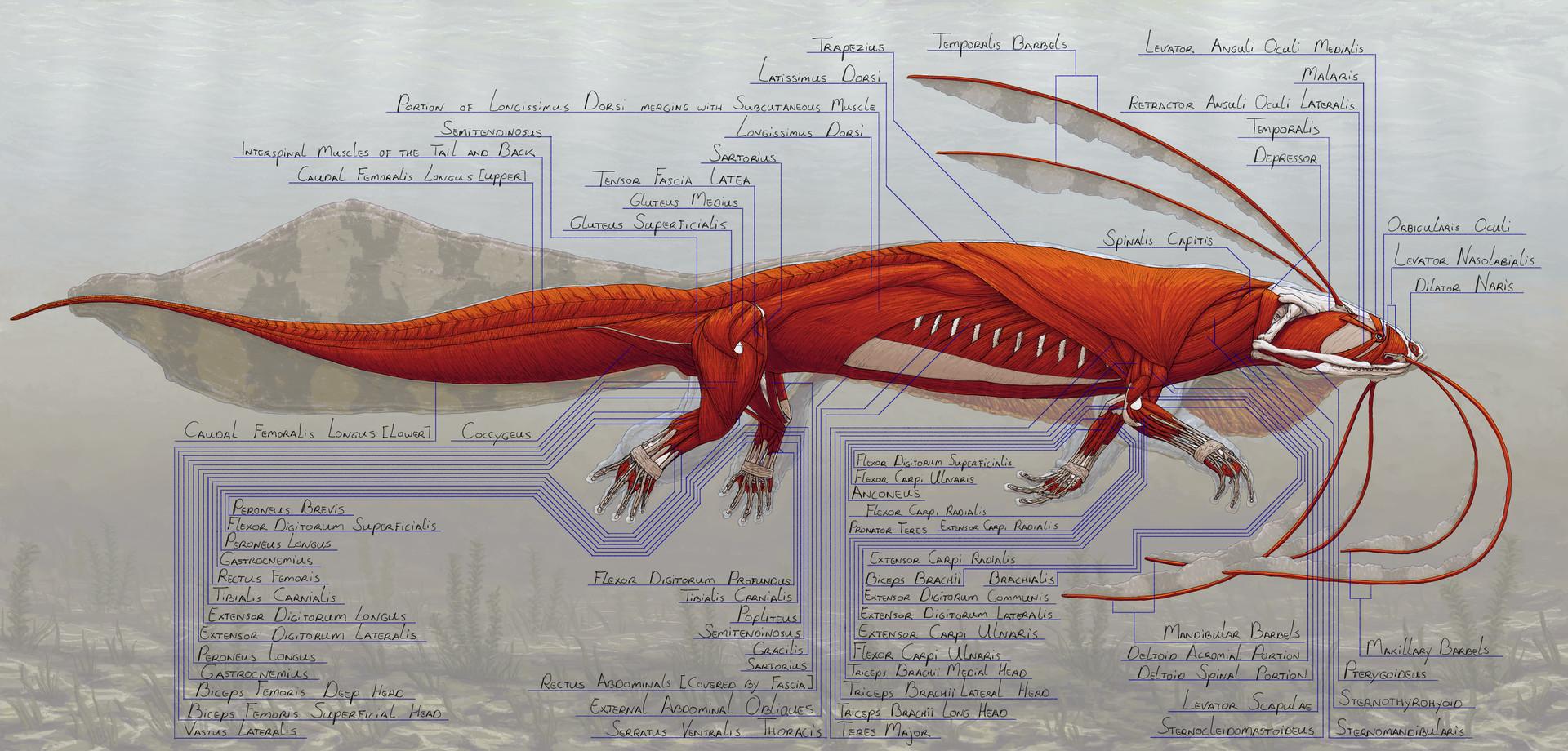 Jordi van hees lesson 2 reptile fish amphibian anatomy homework muscle low res