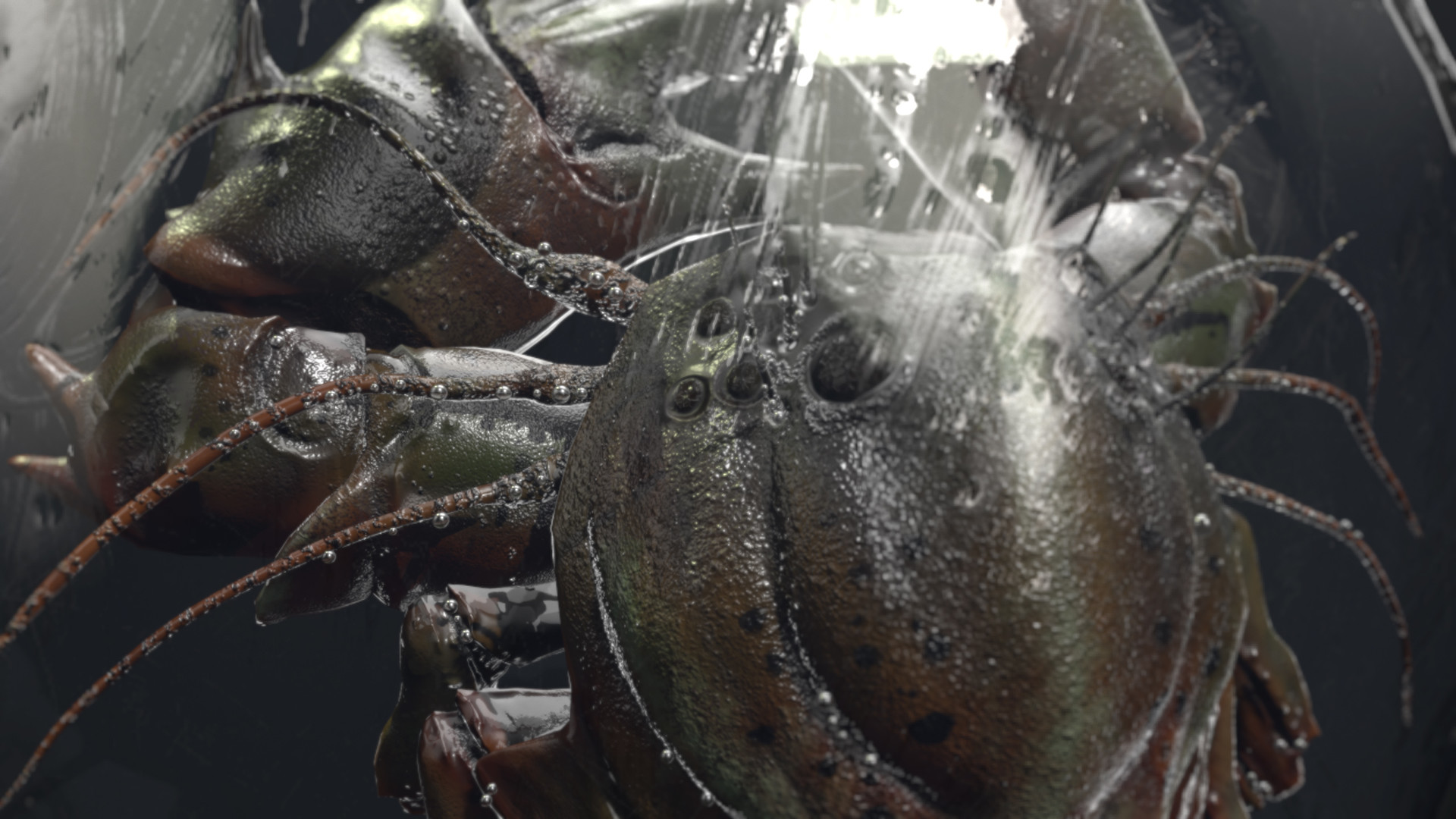 Andrew zelfit mykhailov crab 006