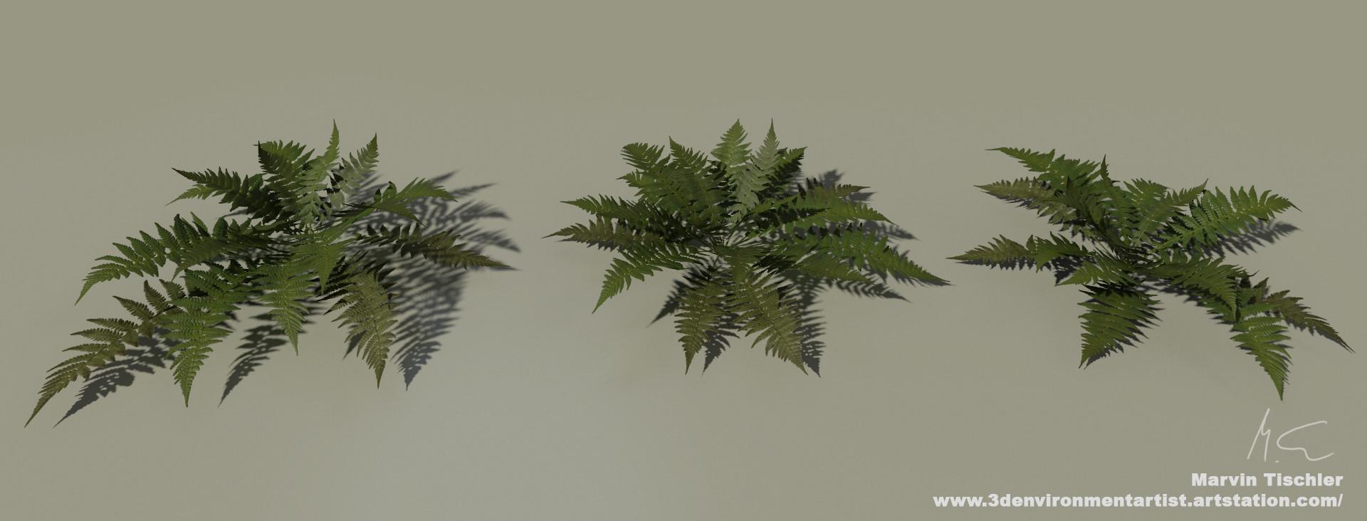 Marvin tischler plants 001 d
