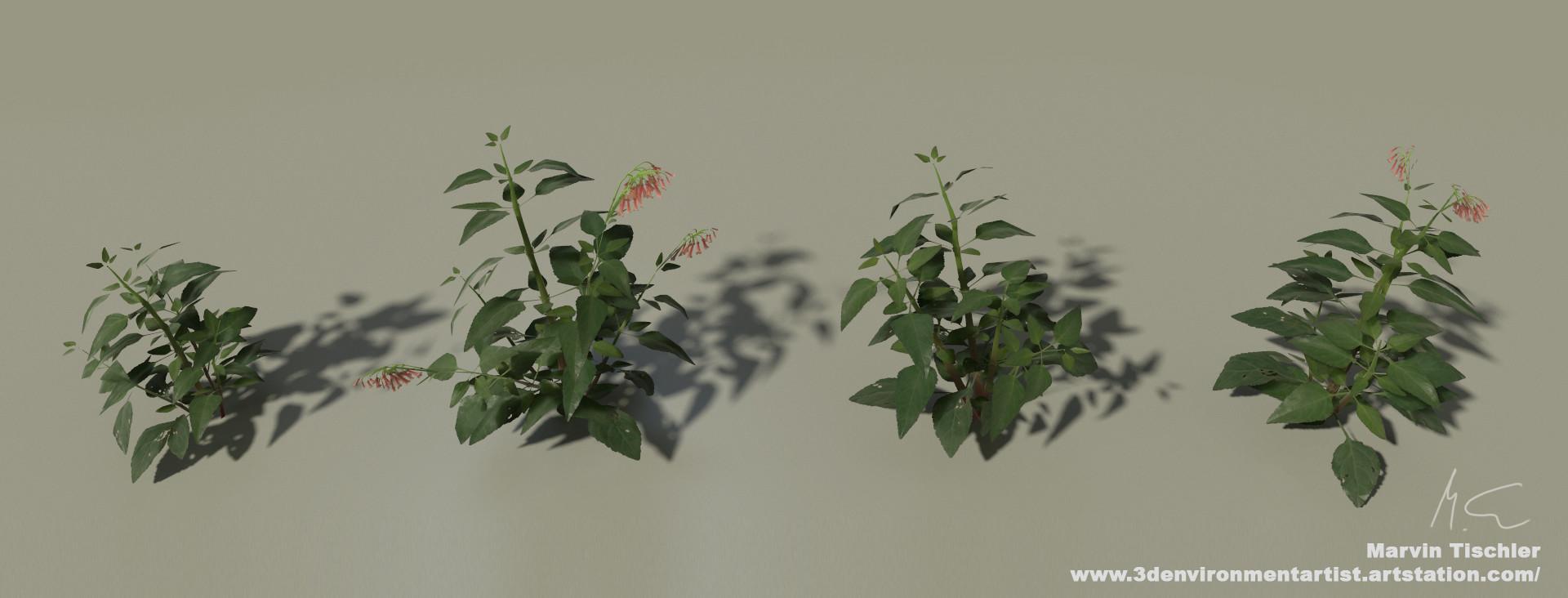 Marvin tischler plants 001 e