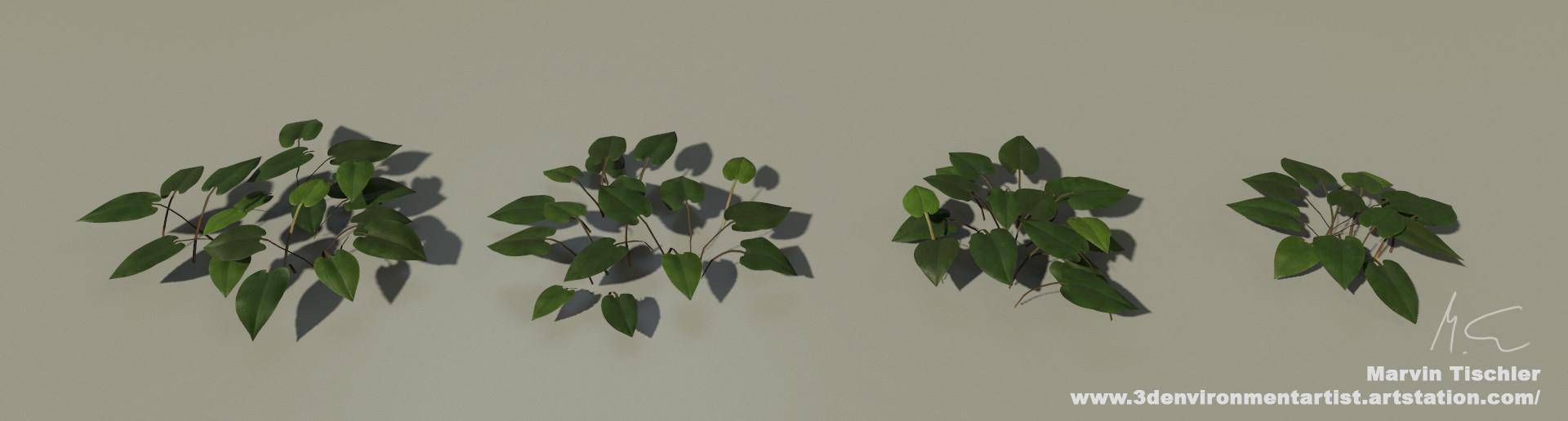Marvin tischler plants 001 k