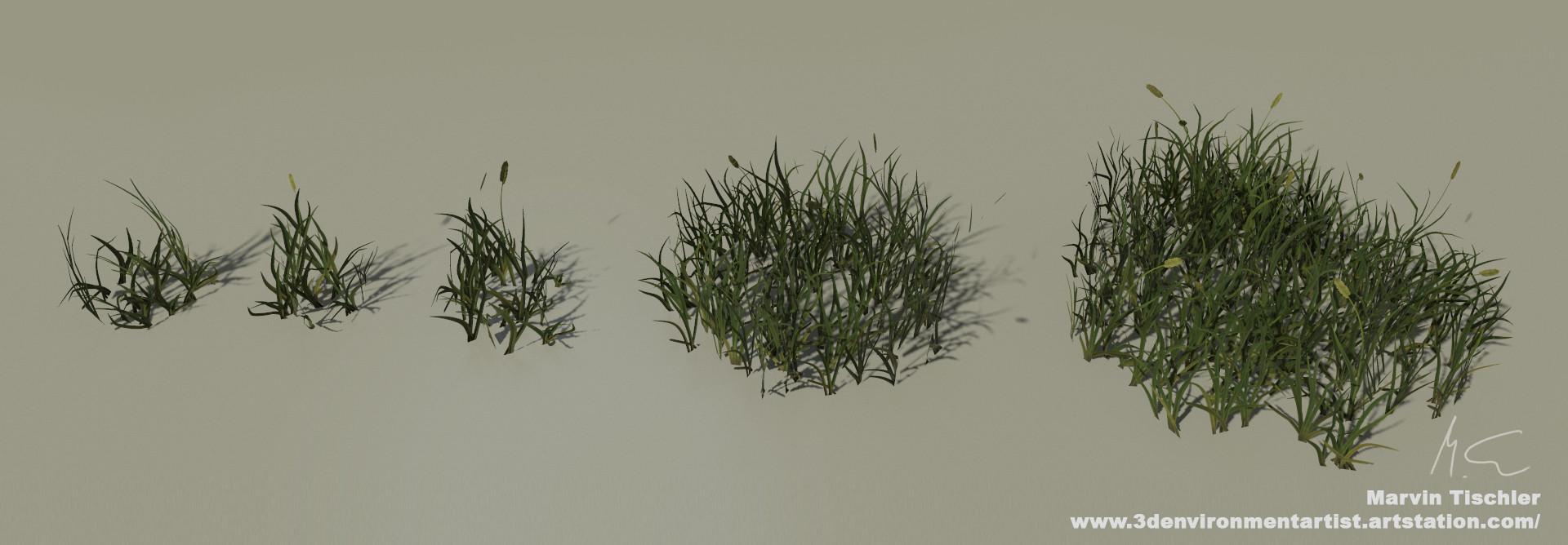 Marvin tischler plants 001 h