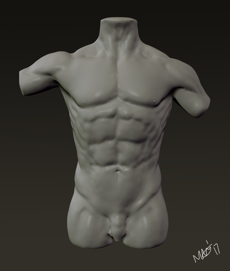Nicola Griffiths Male Torso Anatomy Study