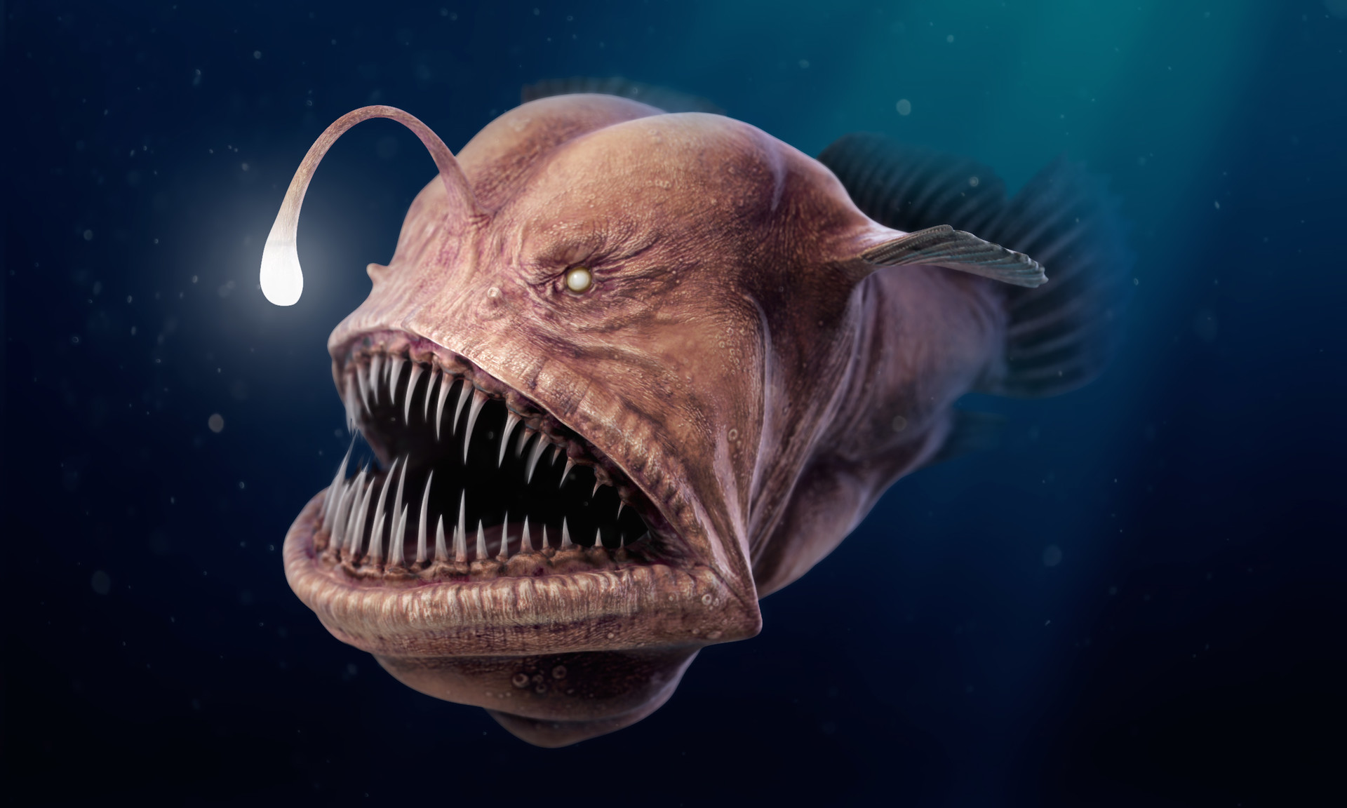 fish with human teeth