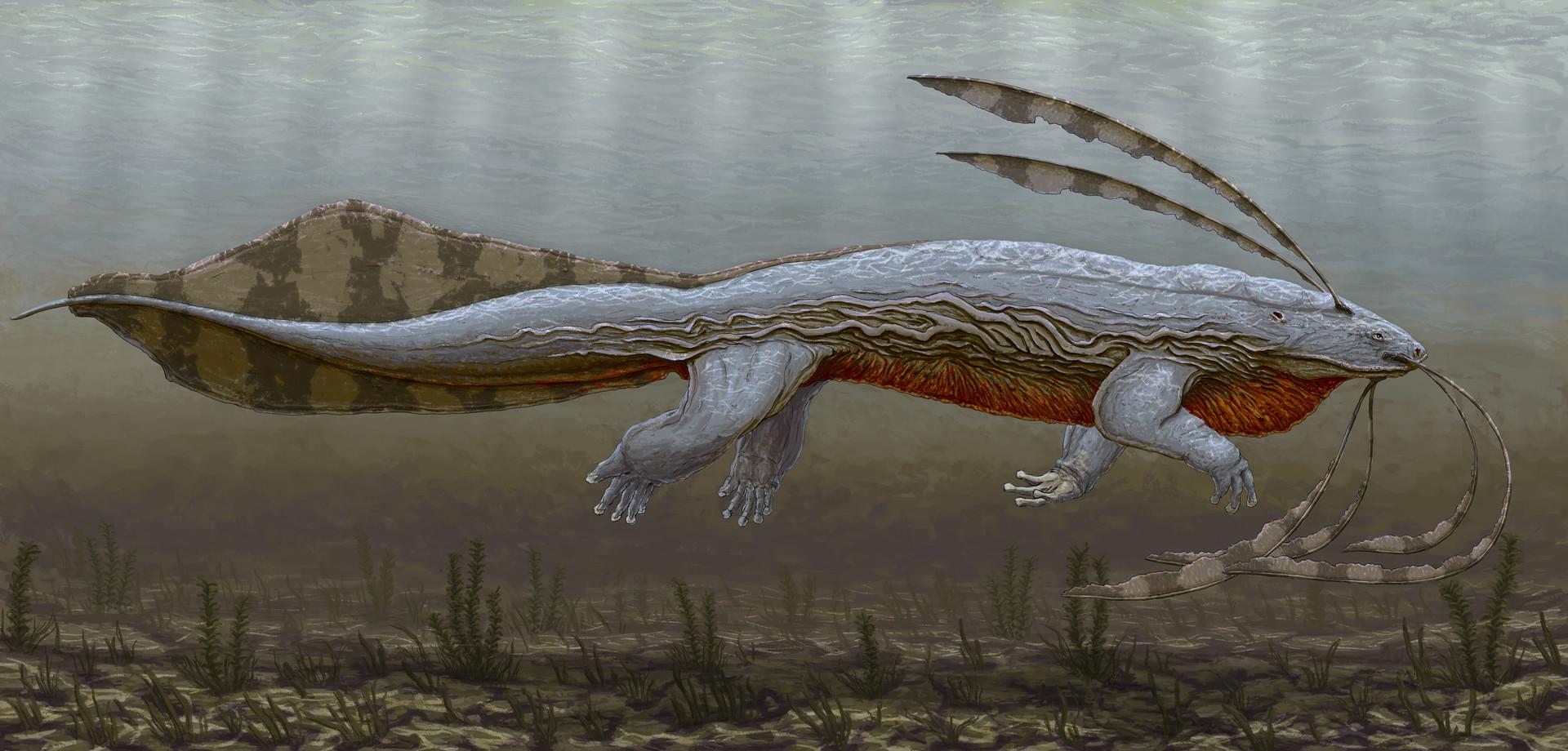 Jordi van hees lesson 2 reptile fish amphibian anatomy homework skin low res