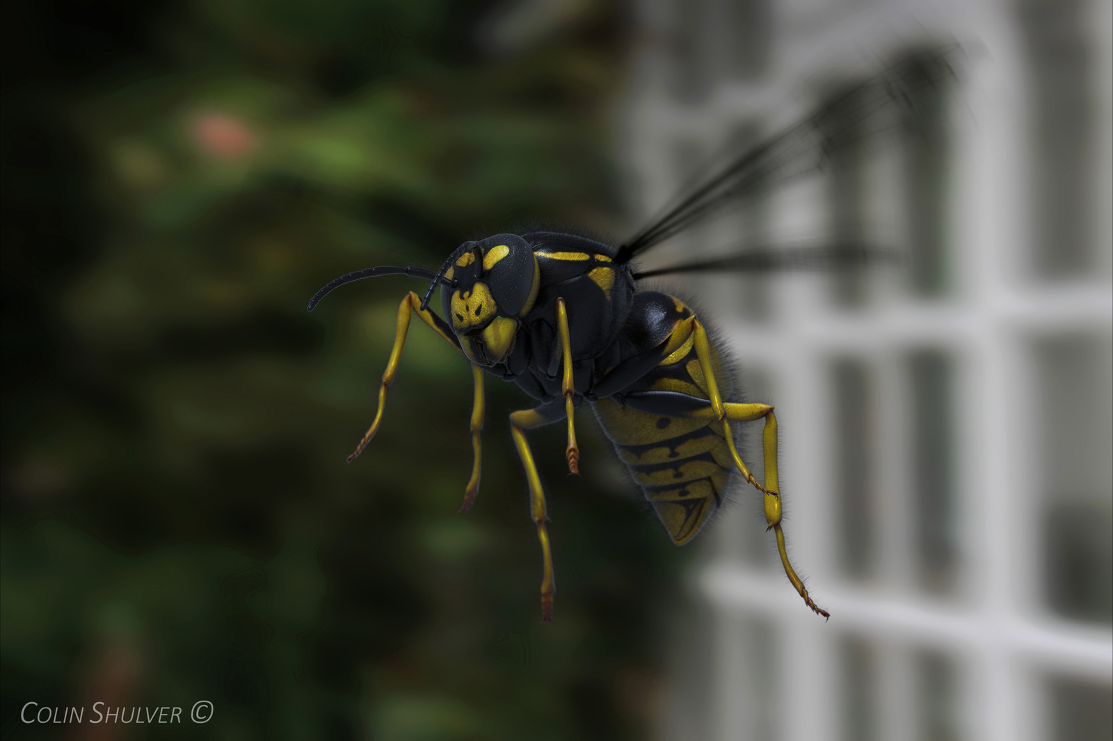 Personal Work - Wasp