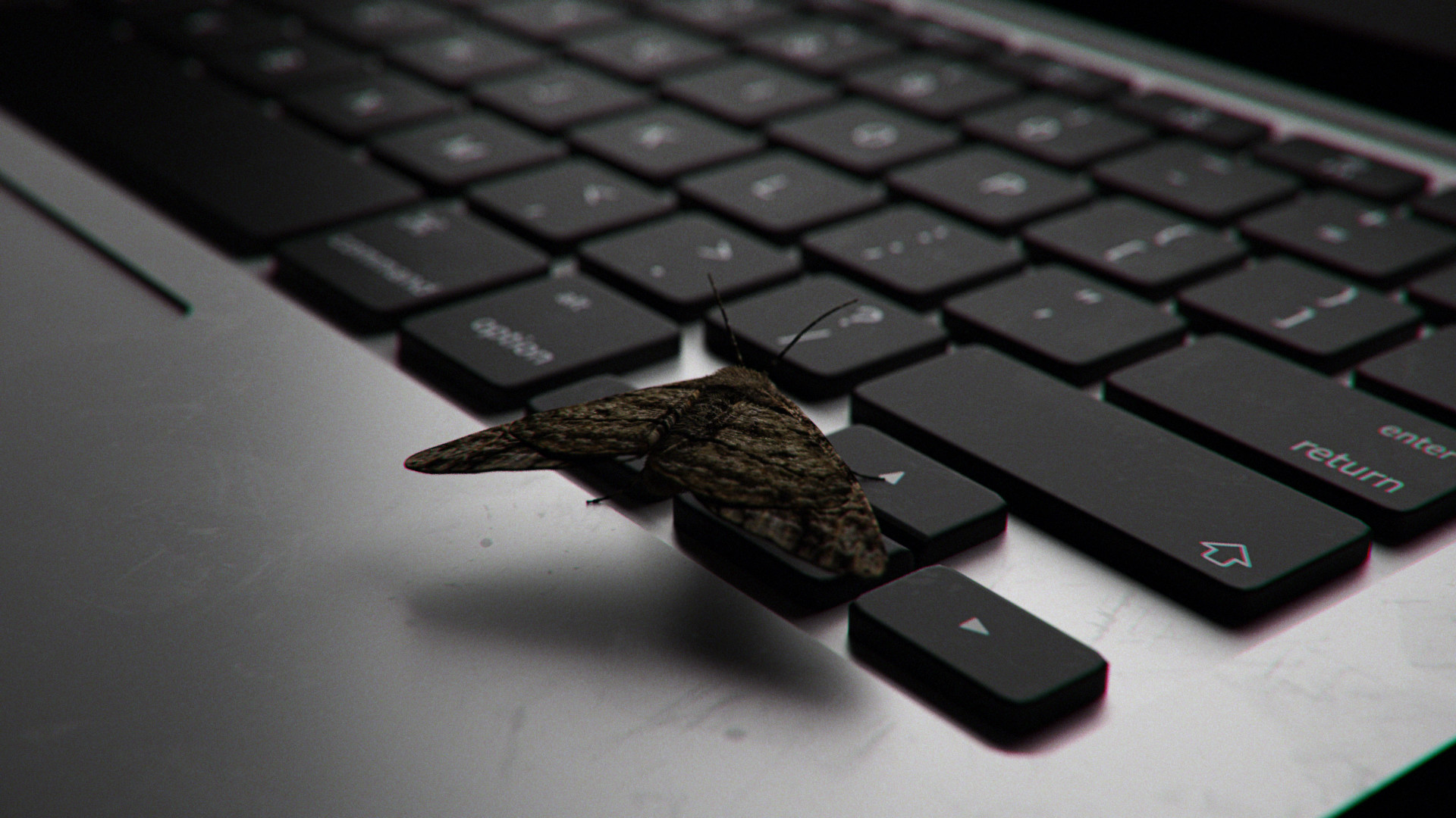 Cgmonkeyking screen moths 02 keyboard pp 0025