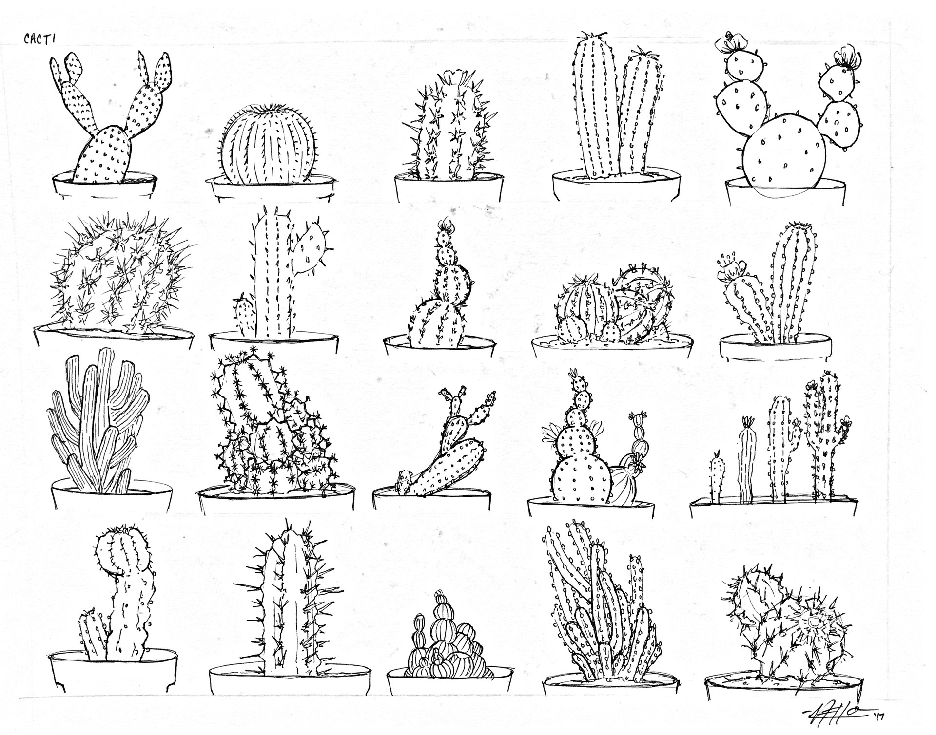 Michelle lo cacti sketch rotated