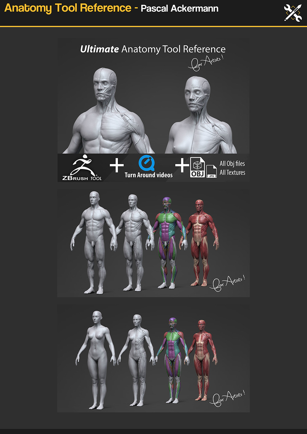 Anatomy Tool Reference - https://gumroad.com/a/224212083