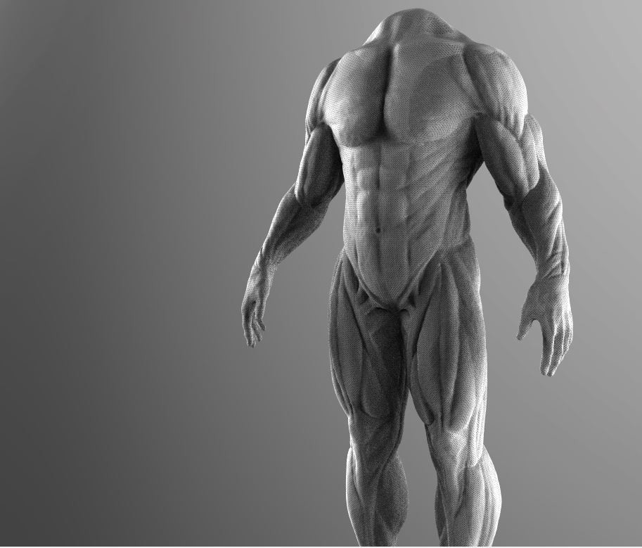 Started with 3d end of 2016 september self taught anatomy mesh 4