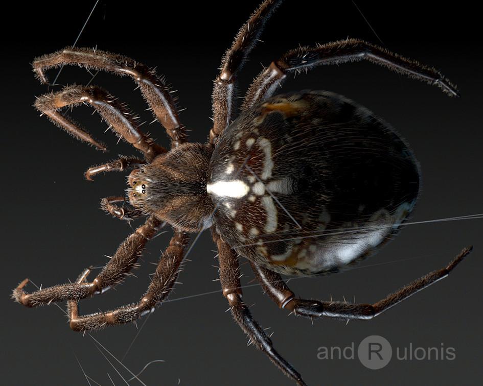 Dariusz andrulonis araneus diadematus 01
