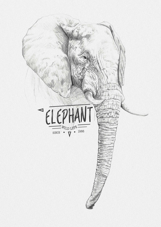 Miguel sastre elephant