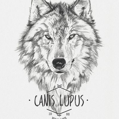 Miguel sastre wolf2