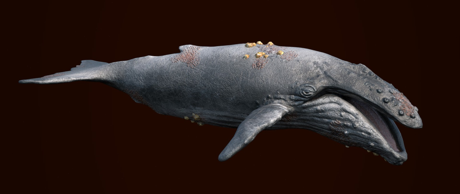 Laurie annis humpbackwhale haunting render32