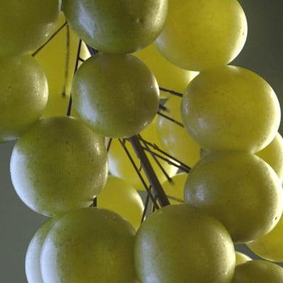 Rakan khamash grapes 2 final